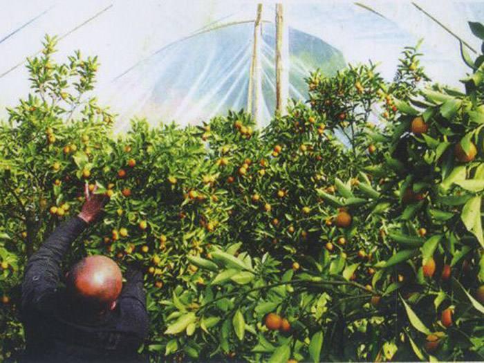 【長河】供應~橘子專用膜/橘子專用膜價格