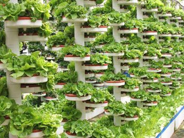 生態無土栽培承建-哪里有提供高性價無土栽培