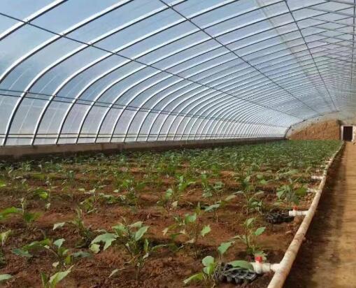 南寧蔬菜溫室大棚多少錢