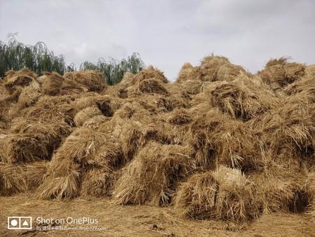 内蒙古治沙固沙稻草哪家好|哪儿能买到实惠的治沙固沙稻草