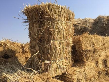 陕西草支垫-去哪买质量好的草支垫