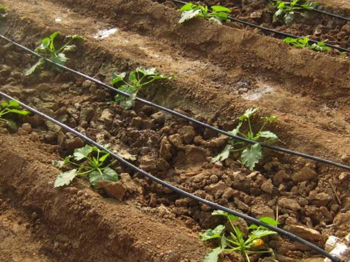 宁夏滴灌带厂家_想买口碑好的宁夏滴灌带,就来宁夏顺雨节水灌溉
