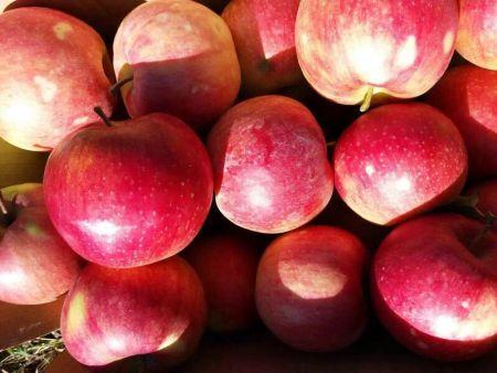 大连有机水果批发-零售-供应商-大连东方绿康