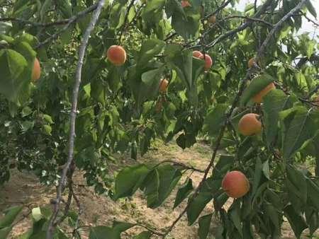 鞍山有机水果哪家好 辽宁品质好的有机水果批发供应
