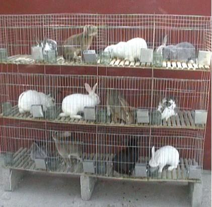鸡鸽兔笼 厂家直销 山东宠物笼总销售