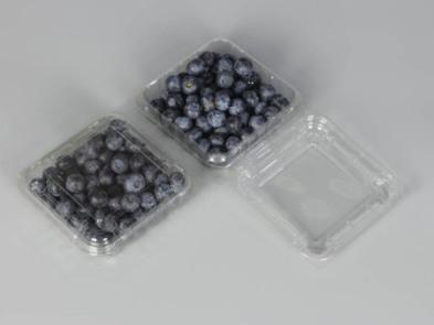 青岛蓝莓包装盒加工-青岛泰聚恒专业供应蓝莓包装盒