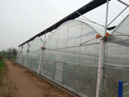 无土栽培大棚-山东报价合理的连栋薄膜温室