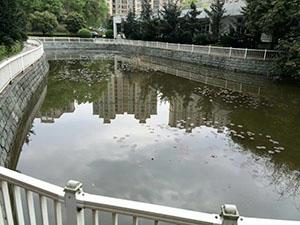 水質凈化劑-青島供應好用的濃縮消化菌   -水質凈化劑