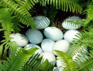 中国鸡蛋厂家-销量好的鸡蛋报价