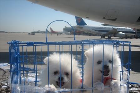 阔航国际搬家承接苏州到台湾搬家行李打包运输预送纸箱
