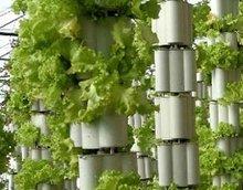 推荐寿光垂吊式气雾培设计厂家——冬日暖阳,知名的无土栽培公司