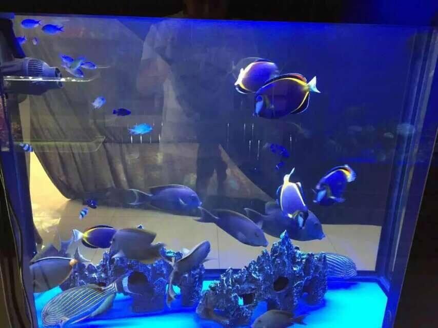 室内海洋展出租,海洋世界各种小鱼展览