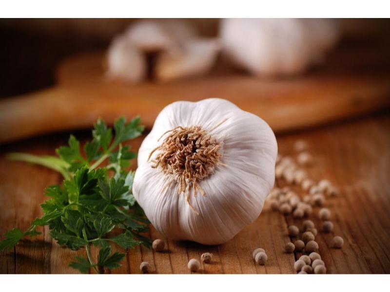 51大蒜网-物超所值的山东大蒜-康德果蔬供应