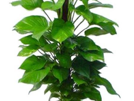 重慶植物出租哪家好
