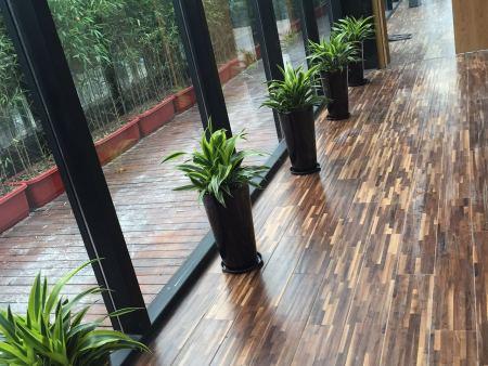 知名植物出租公司有哪些|重庆具有口碑的重庆植物租赁公司