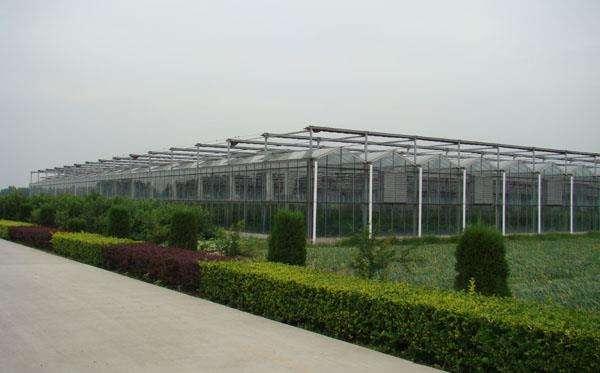 【优惠多多】江苏高温连栋大棚|江西园艺温室造价-诚誉温室