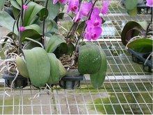 温室苗床系统