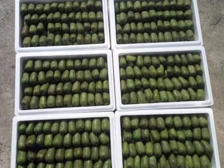 抚顺软枣猕猴桃繁育基地|供应辽宁品种好的软枣猕猴桃繁育基地