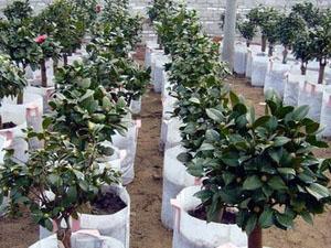 南阳好的植树袋-郑州地区具有口碑的无纺布植树袋