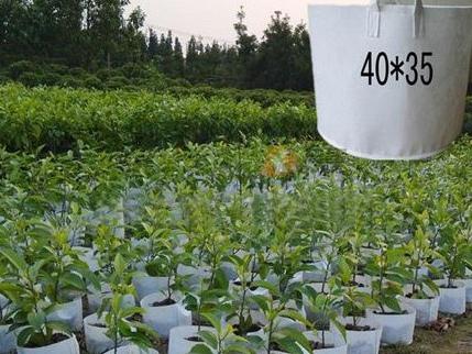 植树袋制造业_郑州品牌好的无纺布植树袋哪里买