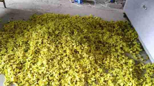 药用菊花烘干机菊花烘干机网带式菊花烘干机菊花多层带式干燥设备