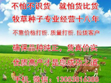 栽培健宝牧草的技术特别简单