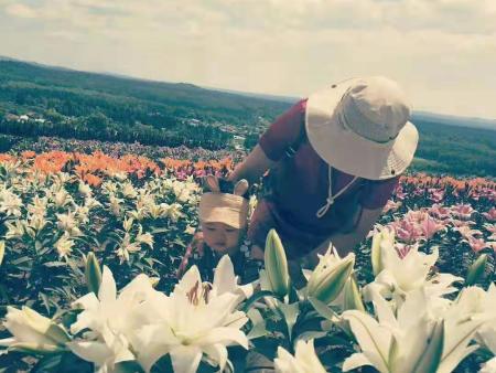 辽源白鲜皮籽批发-来抚松兴旺中草药种植合作社,买划算的观赏百合切花
