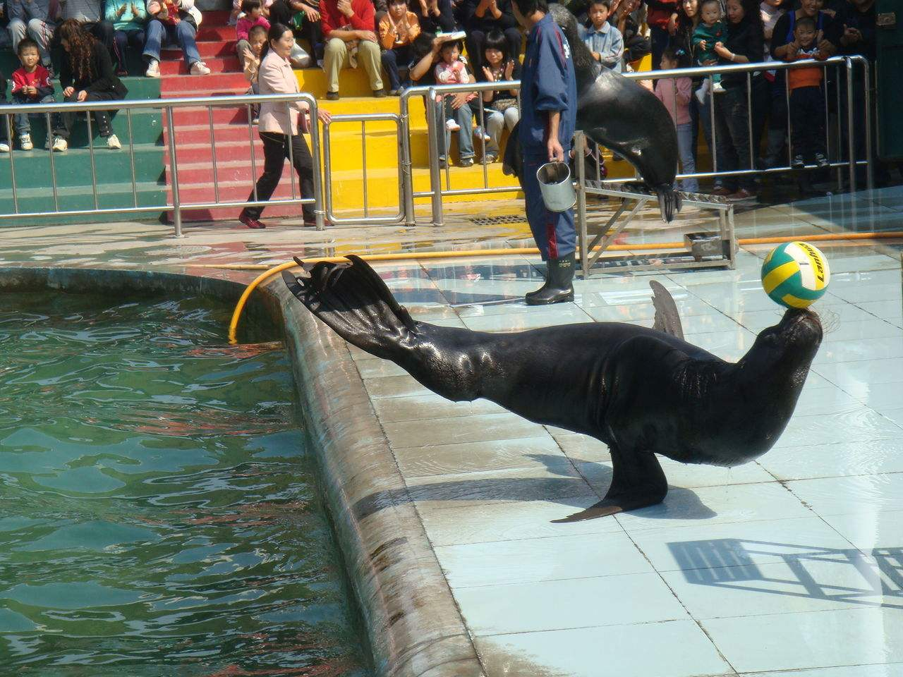 优良的黑天鹅养殖哪里有 萌宠租赁代理加盟