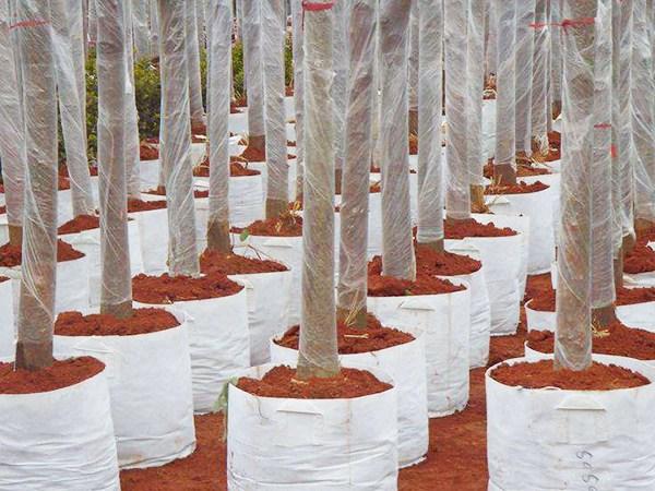 优惠的种植袋-郑州价格适中的种植袋上哪买