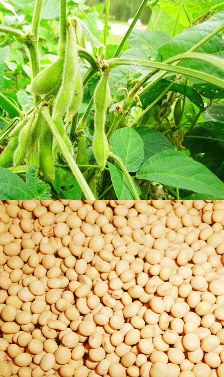 豆豉價位|報價合理的剁姜水豆豉哪里有賣