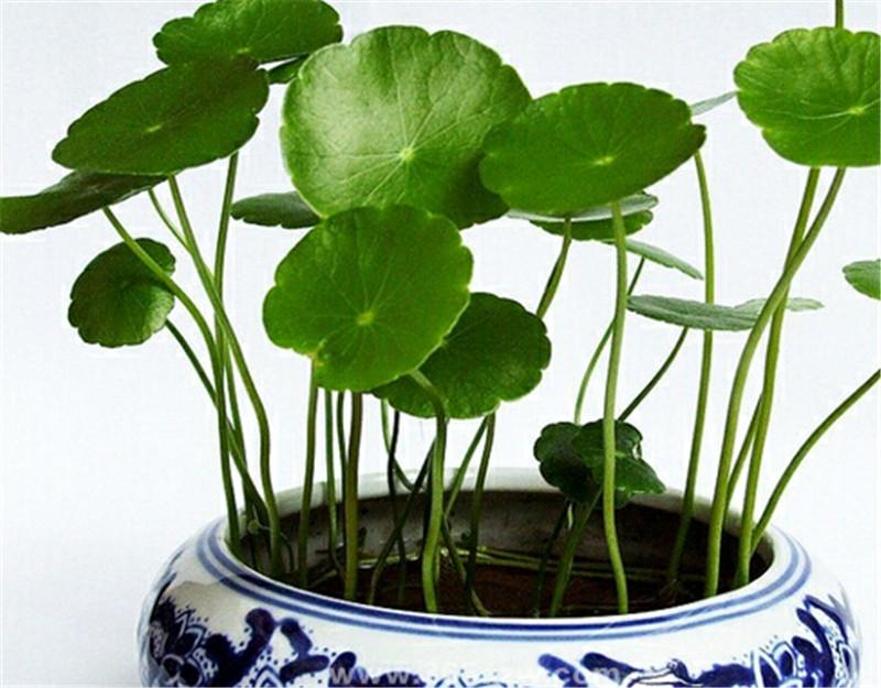 哪里卖水生植物-为您推荐质量好的水生植物