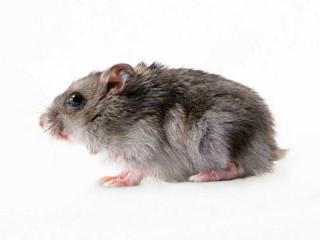 重庆灭鼠公司