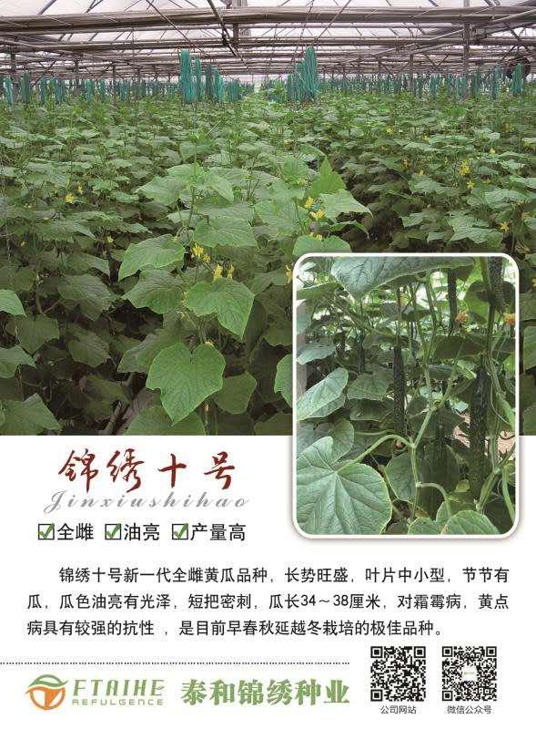 锦绣十号黄瓜种子价格-泰和锦绣种业专业批发黄瓜种子