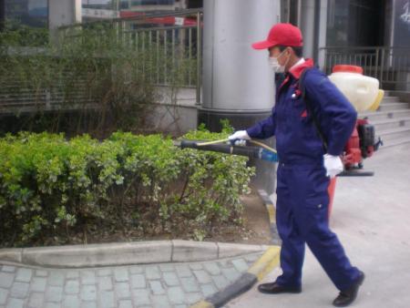 重慶園林白蟻防治哪家好-專業的渝中區白蟻防治提供