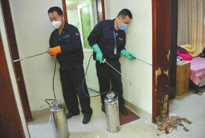 渝中区白蚁防治