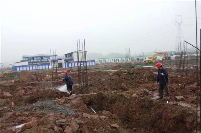 渝中区白蚂蚁灭治-重庆市口碑好的渝中区白蚁防治公司推荐