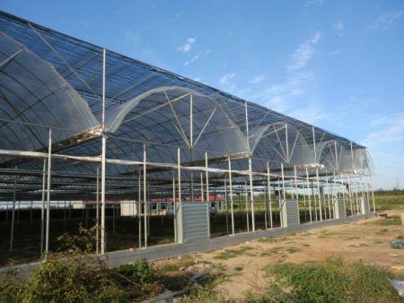 山东连栋温室—为你推荐性价比高的连栋温室建造商—青州鑫隆