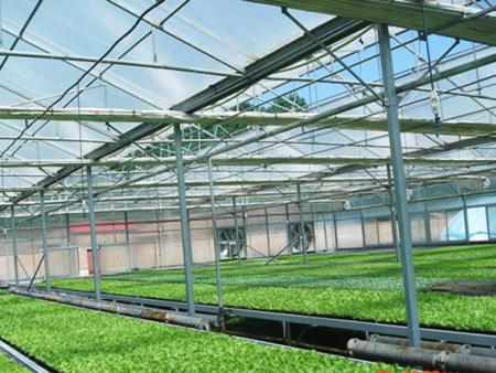 蘑菇养殖大棚报价,蘑菇养殖大棚建造,蘑菇养殖大棚
