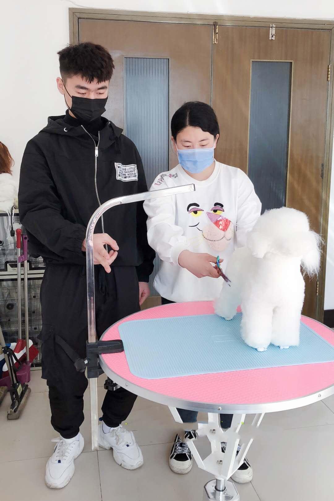 福山宠物美容培训|上哪找专业的宠物美容