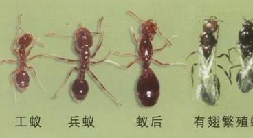 重庆灭白蚁公司