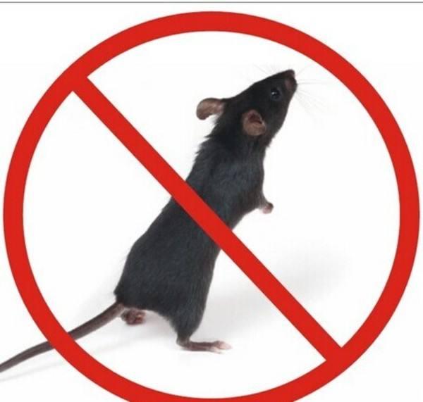 滅鼠電話-規模大的重慶滅鼠公司就是惠樂施環保科技