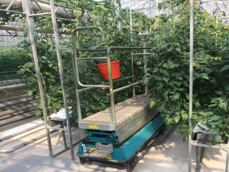 基质椰糠栽培公司_想买新品基质椰糠栽培,就到承航景观工程