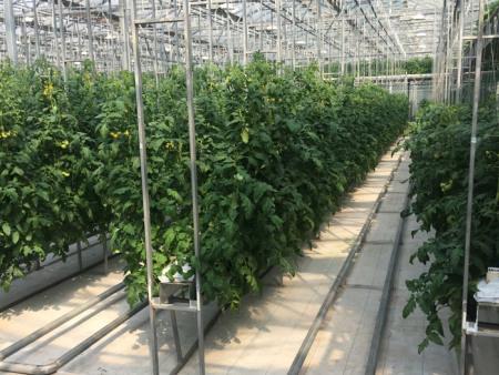 基质椰糠栽培公司-潍坊知名的基质椰糠栽培提供商