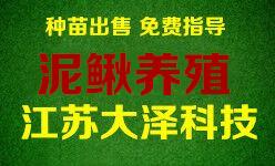 泥鳅养殖公司_稻田泥鳅养殖技术【江苏大泽科技】免费培训