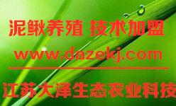 泥鳅养殖|稻鳅混养技术免费培训【江苏大泽科技有限公司】