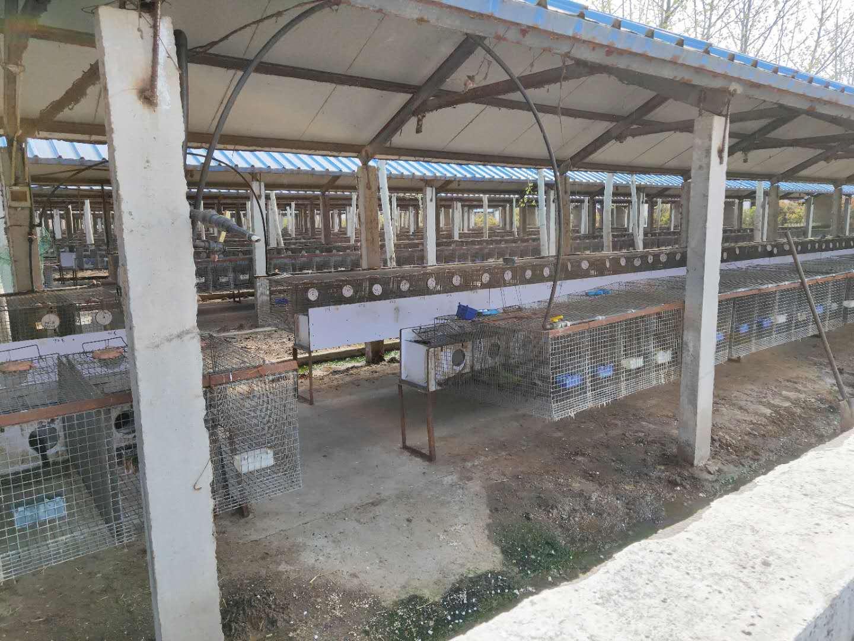 深圳水貂价格-口碑好的水貂种苗市场价格