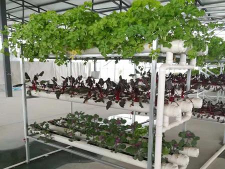 阳台模式栽培