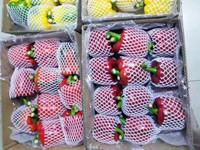 恒大农业供应可信赖的蔬菜购销