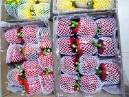 《五彩椒种子》《五彩椒种苗》厂家【向好货进军】