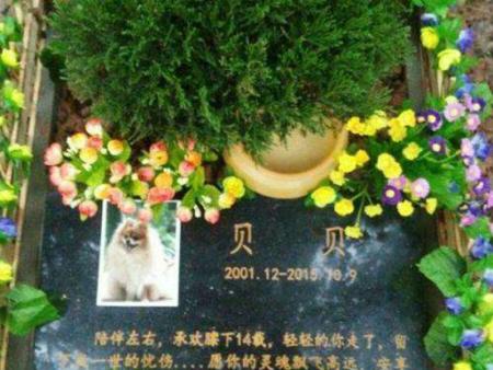 【芋诺宠物】烟台宠物火化_烟台宠物善终_烟台宠物墓地